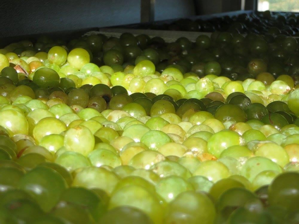 La uva y el vinagre