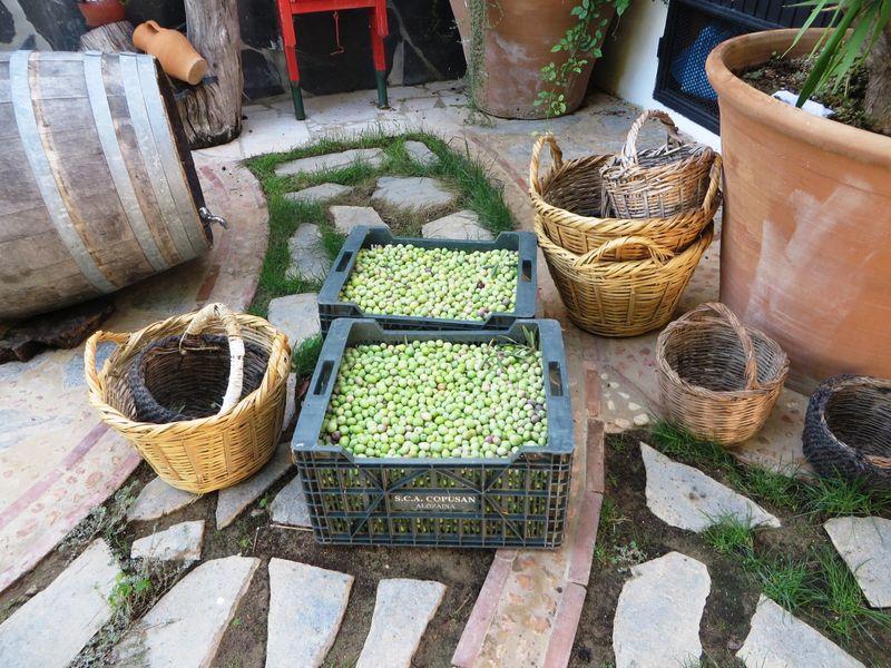 extraccion-aceite-2017-casa-pepe-bravo_39